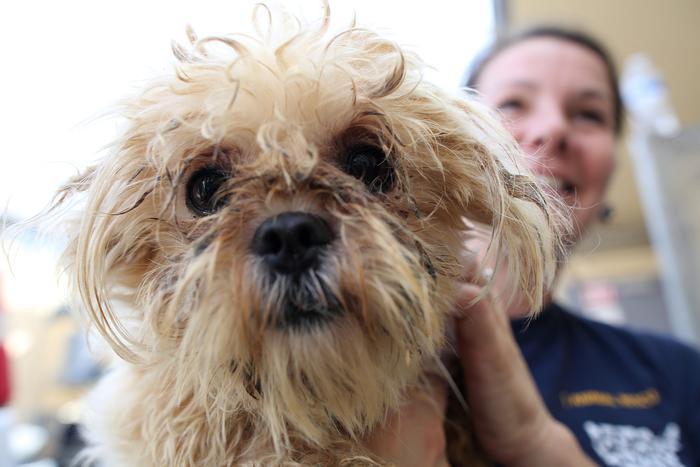 """Humane Society Internationals salva 100 cani da """"carne"""""""