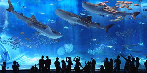 Corea del sud: squalo attacca e mangia un suo simile(video)